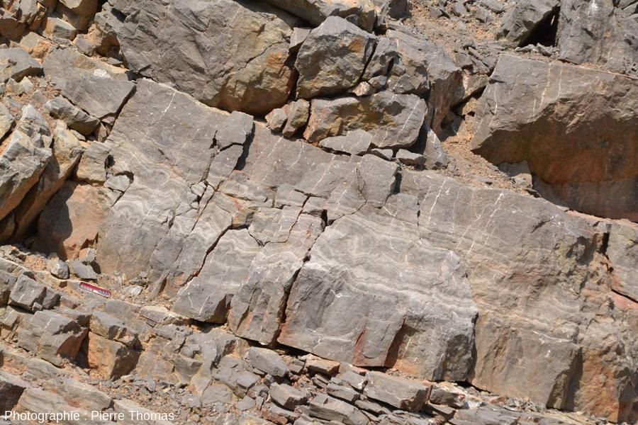 Vue générale sur la partie centrale de la section d'une couche stromatolithique au sein des calcaires viséens de la Carrière du Boulonnais