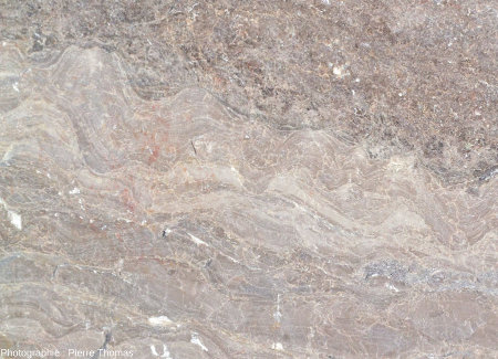 Zoom d'un bloc de calcaire viséen de la Carrière du Boulonnais (Pas de Calais) montrant la section d'une couche stromatolithique