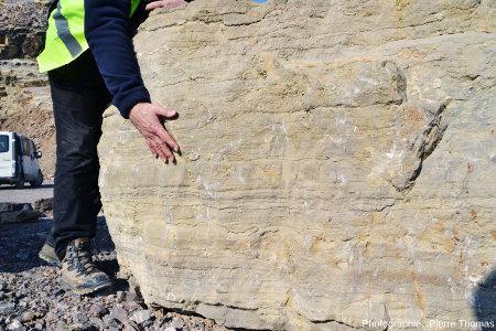 Vue générale d'un bloc de calcaire viséen de la Carrière du Boulonnais (Pas de Calais) appartenant au niveau dit «Caroline»