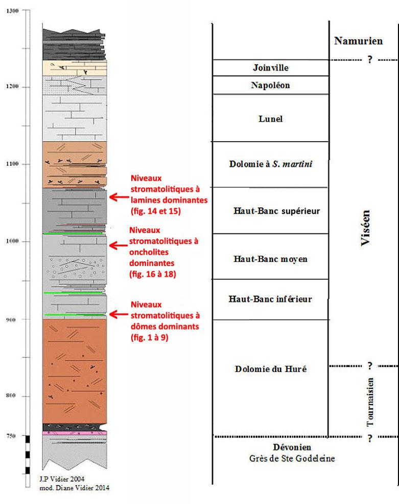 Localisation des principaux niveaux stromatolithiques photographiés ici dans les carbonates carbonifères du Boulonnais