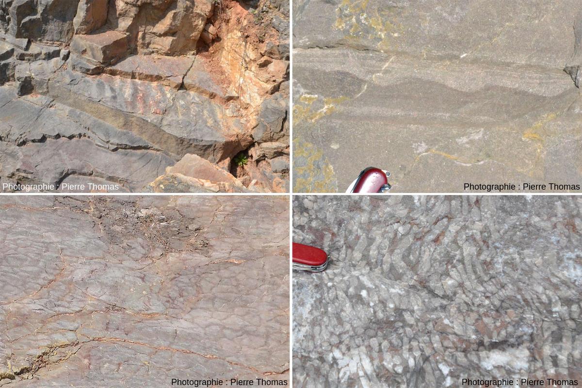 Montage de photos prises dans les calcaires du Viséen (Carbonifère inférieur) de la Carrière du Boulonnais (Pas de Calais) montrant des ripple marks vus de dessus, des ripple marks dissymétriques vus en coupe, des fentes de dessiccation et des coraux fossiles