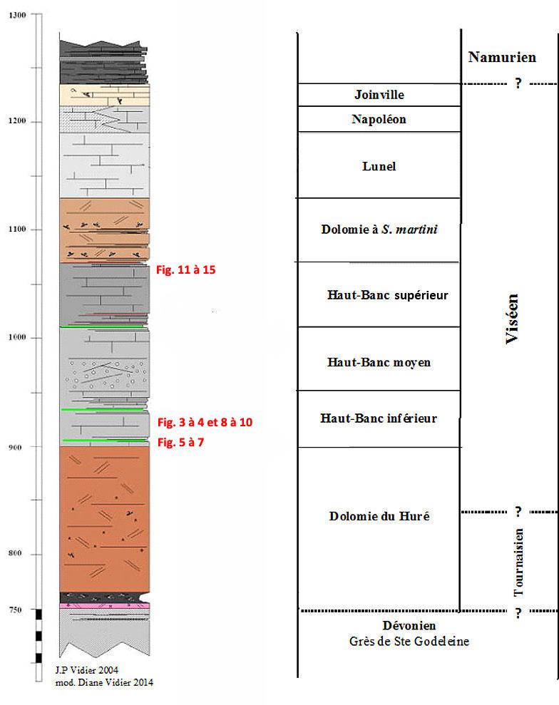 Log stratigraphique de la Carrière du Boulonnais et localisation des photos de cet article