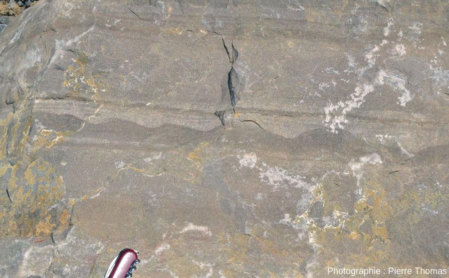 Ripple marks dissymétriques vus en section, Viséen (Carbonifère inférieur) de la Carrière du Boulonnais (Pas de Calais)