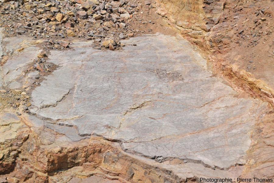 Dalle de calcaire à fente de dessiccation du Viséen (Carbonifère inférieur) de la Carrière du Boulonnais (Pas de Calais)