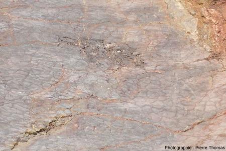 Zoom sur les fentes de dessiccation d'une dalle de calcaire du Viséen (Carbonifère inférieur) de la Carrière du Boulonnais (Pas de Calais)