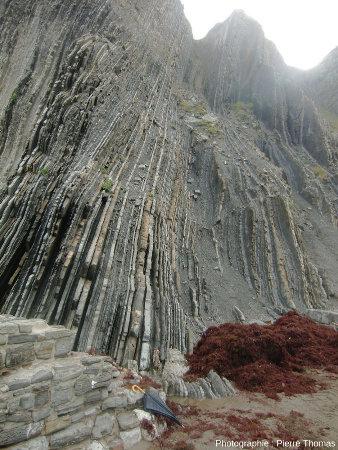 Falaise à couches quasi verticales en bordure de la plage de Zumaia