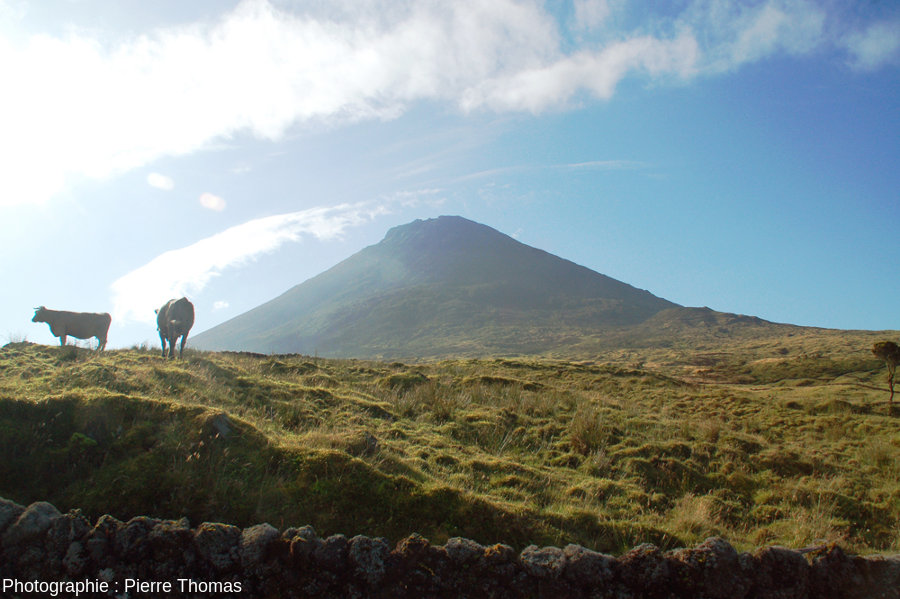 """Le volcan de Pico (2351m) vu depuis l'entrée du """"cône-corral"""""""