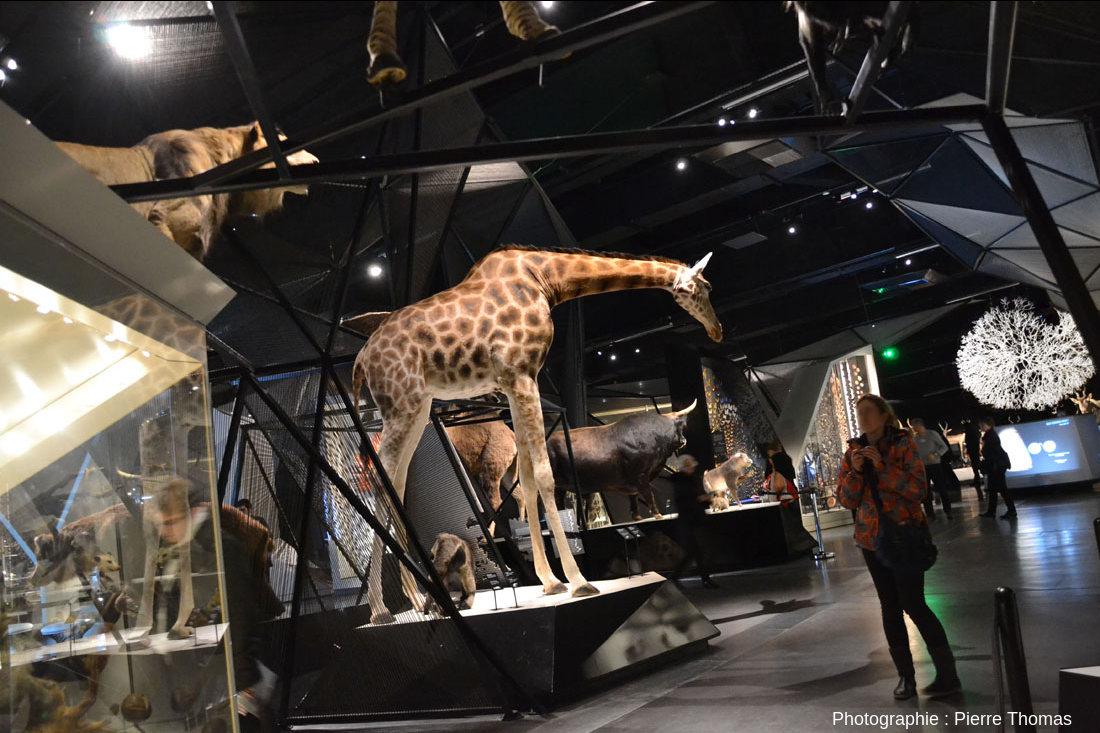 La salle d'exposition Espèces, la maille du vivant du Musée des Confluences de Lyon