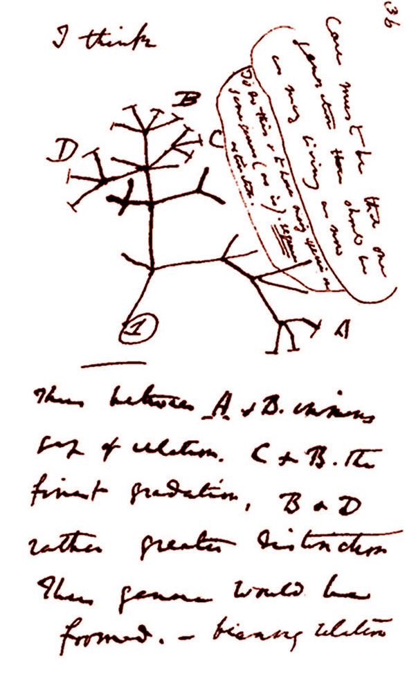 Page d'un carnet de notes de Darwin, carnet écrit en 1837, une vingtaine d'années avant la publication de L'origine des espèces (1859)
