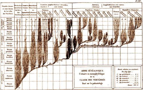 """Un arbre en pin parasol (concernant les seuls vertébrés) où la position verticale n'implique a priori aucune """"hiérarchie de valeur"""" mais simplement la chronologie (telle qu'on la connaissait en 1874)"""