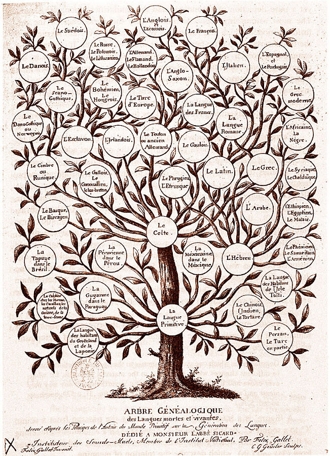 """Exemple d'arbre non emprunté aux SVT montrant la puissance des préjugés qui veulent qu'""""on"""" soit hiérarchiquement supérieur aux autres: l'arbre généalogique des langues tel qu'on pouvait l'établir au début du XIXème siècle"""