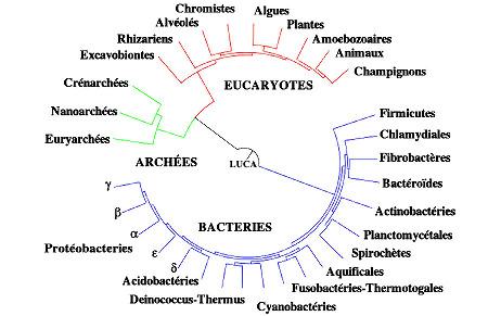 Même type de figure que précédemment, adaptée des mêmes auteurs, mais où les extrémités de tous les rameaux sont sur un même cercle