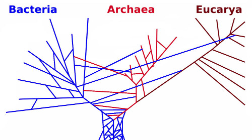 Arbre phylogénétique incluant des transferts horizontaux de gènes entres groupes