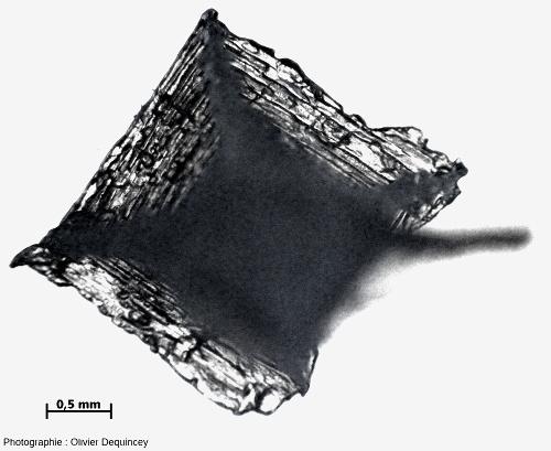 Cristal de fleur de sel (halite) de l'île de Ré vu au microscope optique