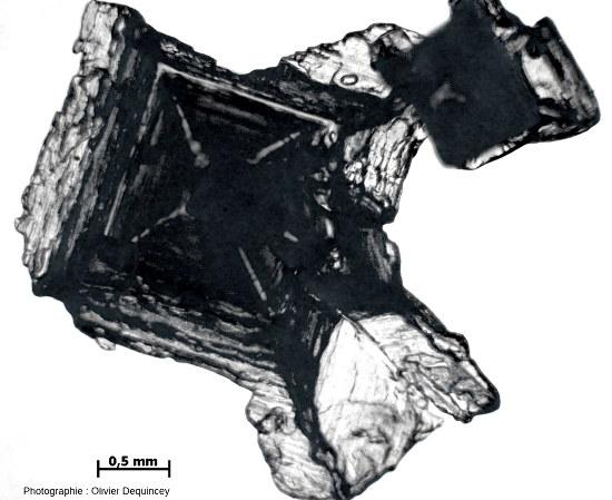 Gros cristal de fleur de sel (halite) de l'île de Ré