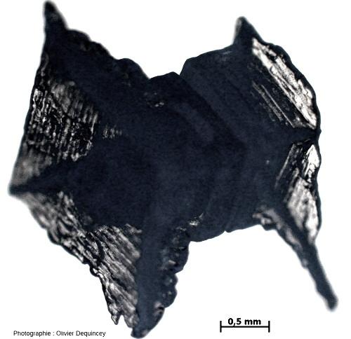 Cristal de fleur de sel bipyramidé (halite) de l'île de Ré