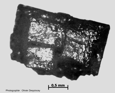Cubes de halite (chlorure de sodium) de l'île de Ré vus au microscope optique