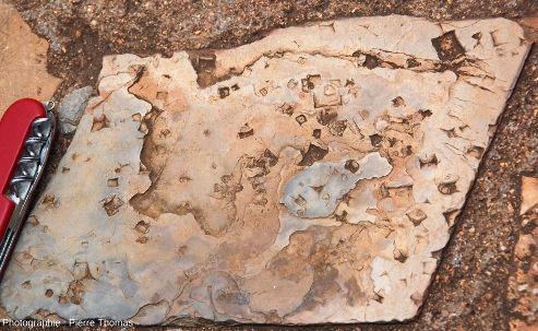 Dalle à empreintes fossiles de trémies de sel (halite), chemin de Bourke's Luck Potholes, canyon de la Blyde River, Afrique du Sud