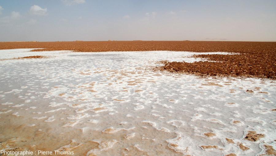 Croûte de sel (au premier plan) en cours de formation sous quelques centimètres d'eau au fond d'un lac salé situé à l'Est de l'oasis de Siwa, Égypte
