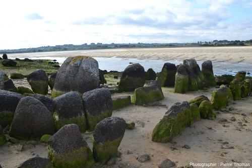 Vue, depuis le Nord-Ouest, de l'allée couverte de Guinirvit, Baie de Kernic, Plouescat (Finistère)