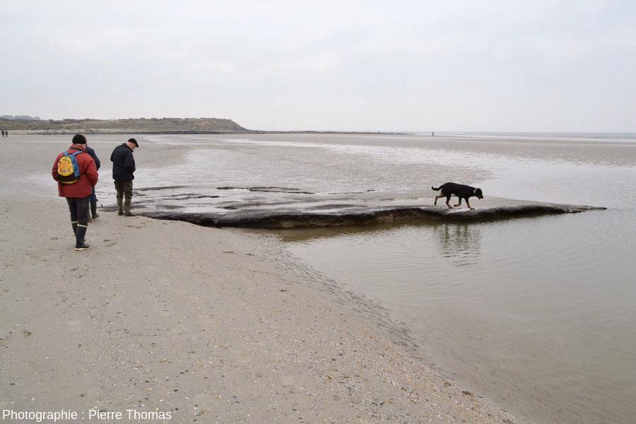 Un banc de tourbe où l'on ne voit que très peu de bois identifiable, plage de la Pointe aux Oies, Wimereux, Pas de Calais