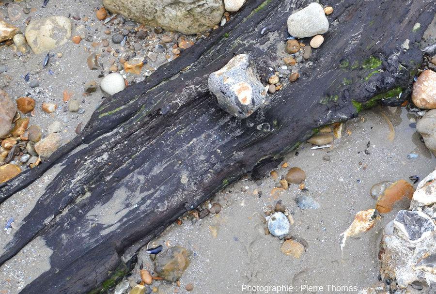 Zoom sur un gros tronc horizontal pris dans et dépassant d'un banc de tourbe, banc presque invisible car presque entièrement recouvert de sable, Pointe aux Oies, Wimereux, Pas de Calais