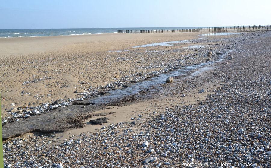 Banc de tourbe photographié sur la plage de Sangatte (Pas de Calais) le 13 avril 2014