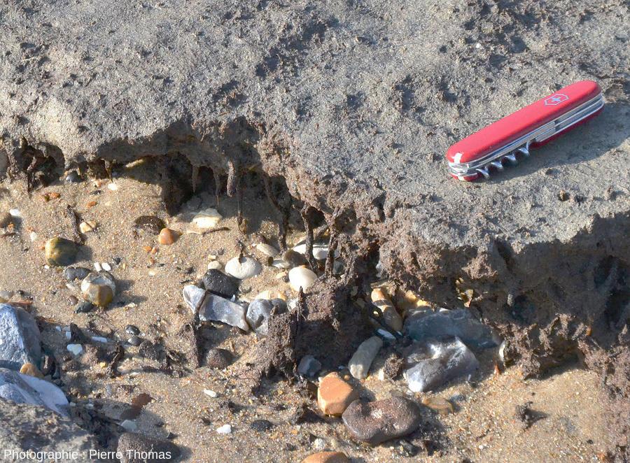 Zoom sur la bordure érodée (face à la mer) d'un banc de tourbe de la plage de Sangatte (Pas de Calais)