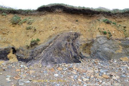 Déformation métrique ressemblant à un mini diapir affectant des argiles tourbeuses et la base des argiles à blocs jaunâtres sus-jacents, plage de Trez-Rouz, Crozon, Finistère