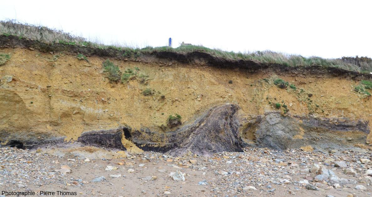 Vue d'ensemble du principal affleurement d'argiles tourbeuses de la plage de Trez-Rouz (Crozon, Finistère)