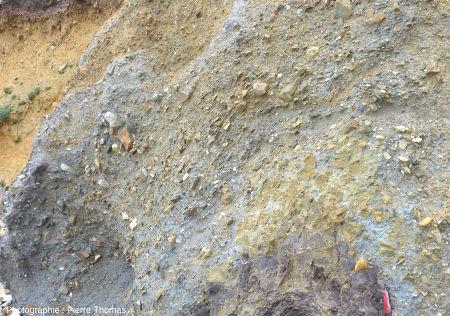 """Zoom sur le sommet d'un """"diapir"""" de tourbe de la plage de Trez-Rouz, Crozon (Finistère)"""