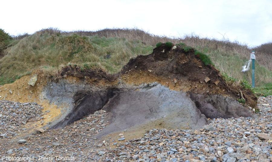 Affleurement d'argile tourbeuse le plus au Sud de la falaise de la plage de Trez-Rouz (état de janvier 2014), Crozon (Finistère)