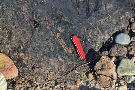 Affleurement d'argile tourbeuse le plus au sud de la falaise de la plage de Trez-Rouz (état de janvier 2014) montrant des débris de bois reconnaissables