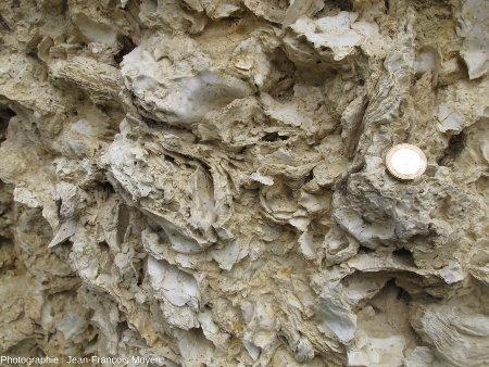 Accumulation de coquilles d'Ostrea aquitanica, huîtres du Burdigalien marin de Sainte Croix du Mont (Gironde)