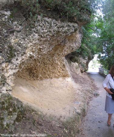 Base du «banc à Huîtres» miocène de Sainte Croix du Mont (Gironde)