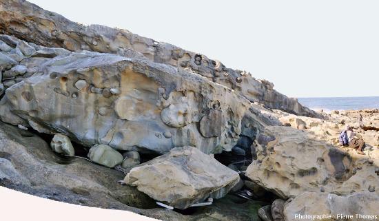 Paramoudras à moitié dégagés par l'érosion marine affleurant sur des surfaces verticales recoupan nettement la stratification