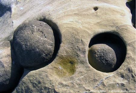 Paramoudras à moitié dégagés par l'érosion marine affleurant sur des surfaces verticales recoupant nettement la stratification