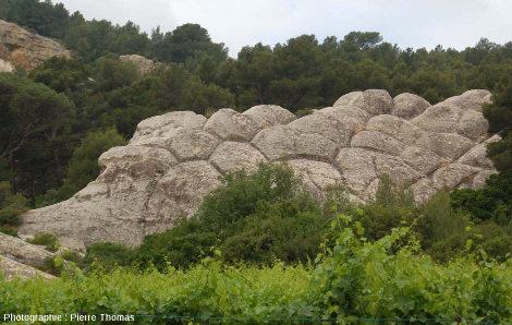 """Polygones """"géants"""" à la surface des grès de Sainte-Anne, Sainte-Anne d'Évenos (Var)"""