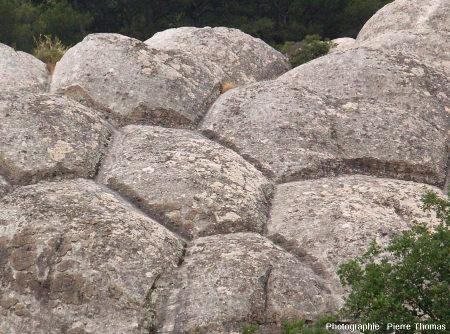 Structures polygonales affectant les grès de Sainte-Anne, Var
