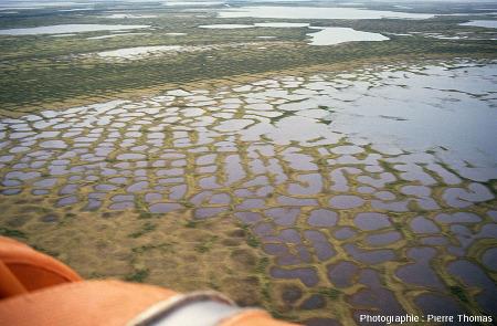 Sols polygonaux de géométrie classique avec un cœur déprimé souvent envahi par l'eau et des bordures surélevées, delta de la Kolyma (Sibérie)