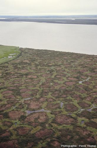 Polygones majoritairement hexagonaux ou pentagonaux séparés par des sillons (pleins d'eau), delta de la Kolyma (Sibérie)