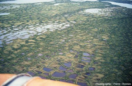 Sols à polygones de géométrie variée séparés par des crêtes parcourues en leur sommet par un sillon, delta de la Kolyma (Sibérie)