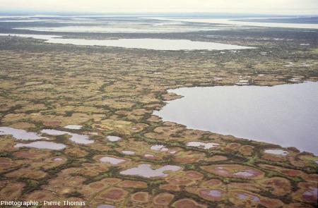 Zone à sol polygonaux de morphologie variée, delta de la Kolyma (Sibérie)