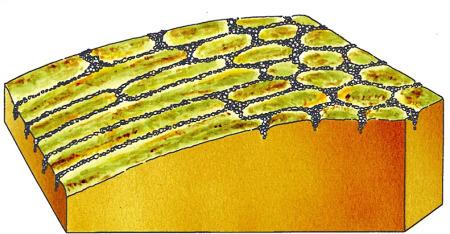 Schéma explicatif montrant le contexte morphologique permettant de passer des sols polygonaux (terrain plat) aux sols striés (pente)