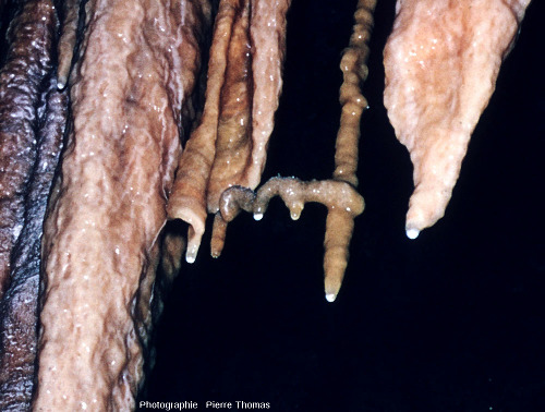 Excentrique, ou hélictite, en forme de tire-bouchon, Grotte de Clamouse, Hérault