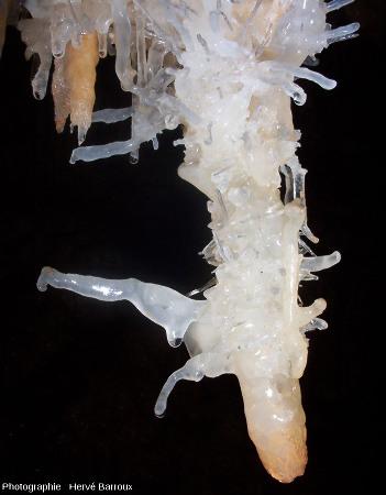 Excentriques de calcite translucide dans la grotte d'Estévan, Gard