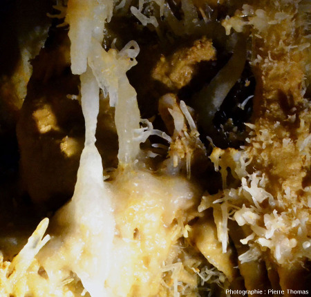 Excentriques de la grotte du Grand Roc, Dordogne