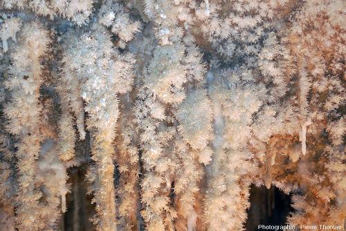 Stalactites recouverts d'aragonite dans la grotte de Clamouse (Hérault)