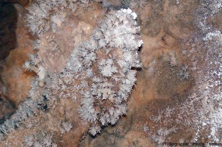 Aragonite sur les parois de la grotte de Clamouse (Hérault)