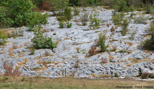Zoom rapproché sur la dalle de calcaire du lapiaz de Loulle (Jura)